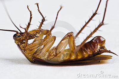 dying-cockroach-9843173.jpg